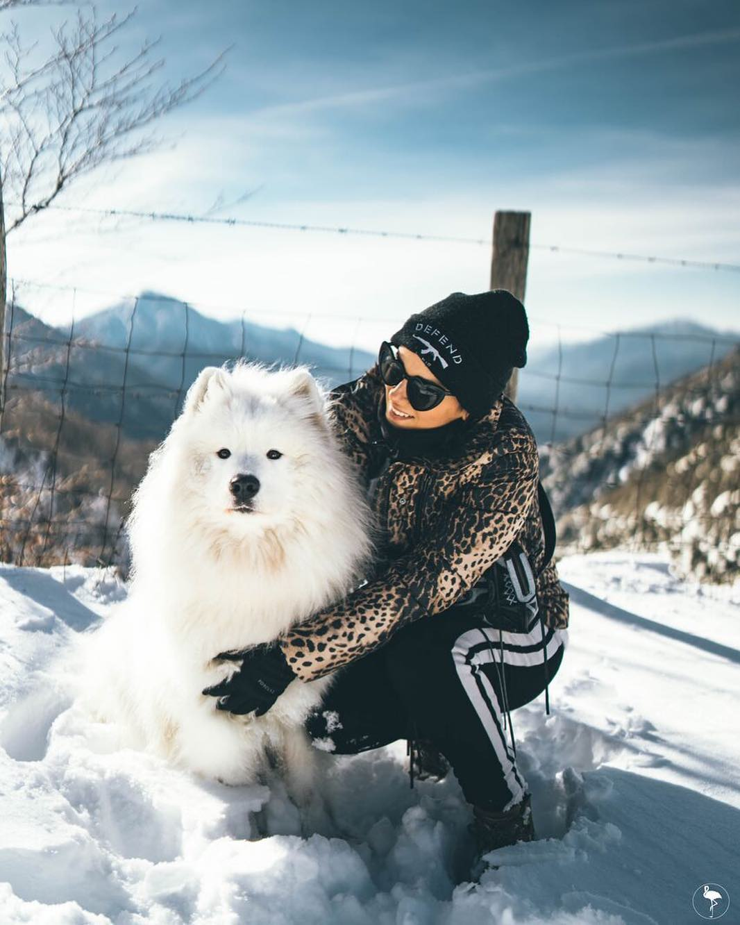 2019-01-26 - My « King in the north » ❄️ @jonsnow_lyonnet #samoyed #gameofthrones #jonsnow #kinginthenorth photo @flamingyo24